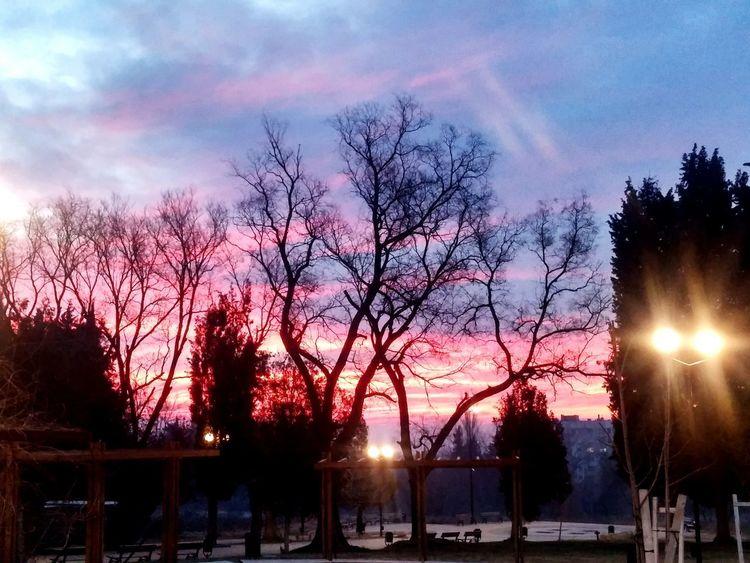 Sky Tree Cloud - Sky Sunset Silhouette No People Outdoors