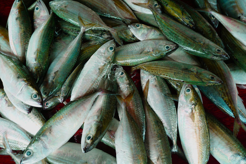 Mackerel #delicious #Fresh #green #mackerel #RavensNation  Abundance Business Close-up Day Fish Fish Market Food Food And Drink For Sale Freshness Healthy Eating Large Group Of Objects Market No People Outdoors Raw Food Retail  Seafood EyeEm Selects EyeEmNewHere