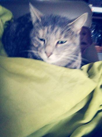 Le chat de ma demie sœur <3