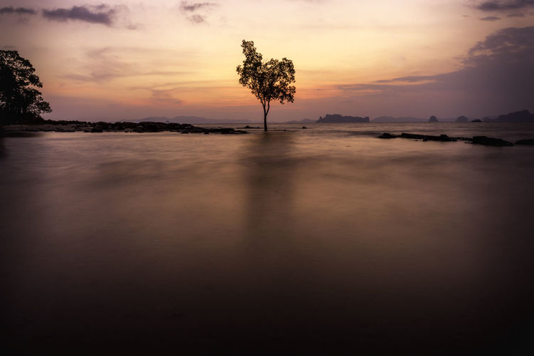 Silhouette Tree Growing In Lake Against Sky During Sunset