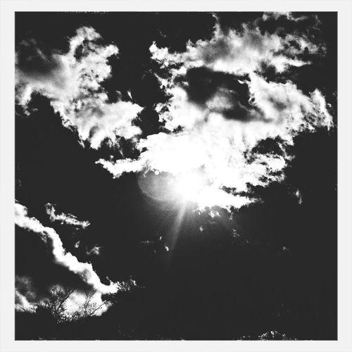 Black And White Enjoying The Sun Beautiful Day