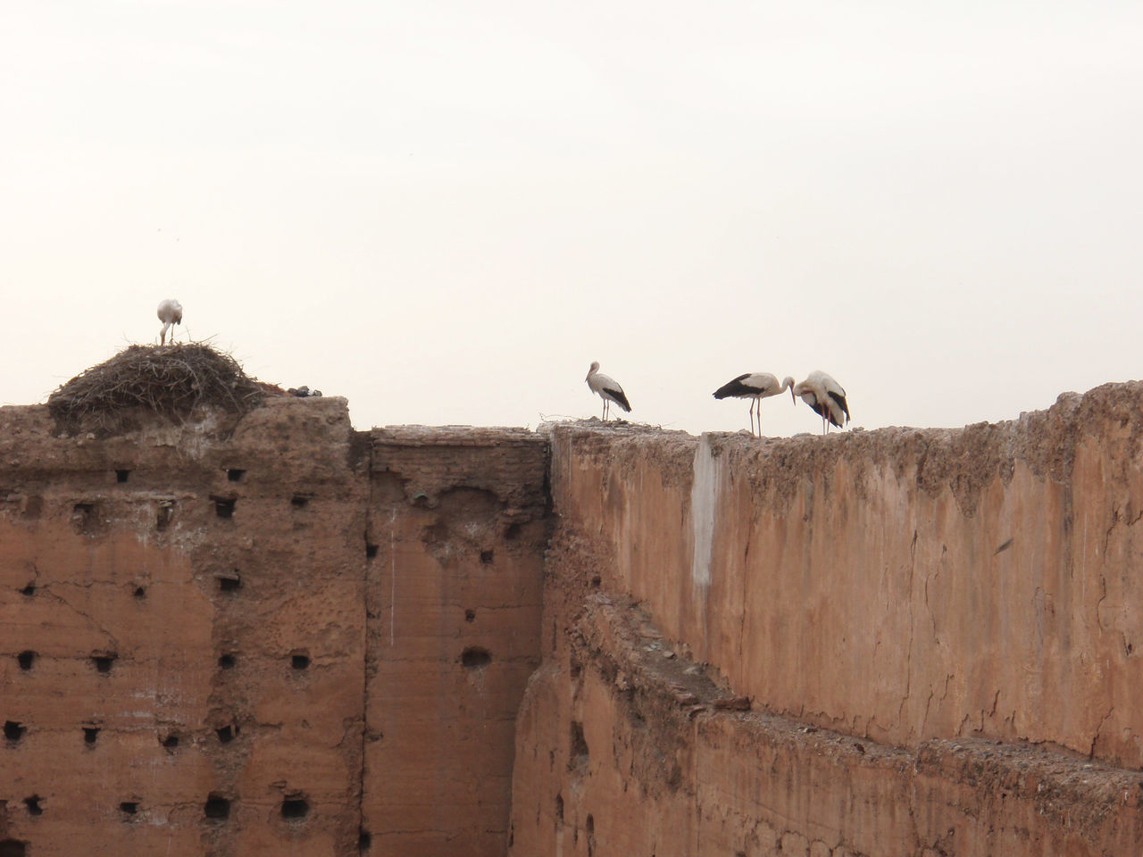Birds Perched On Wall Against Clear Sky