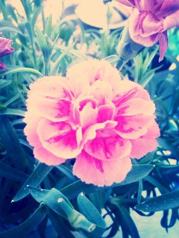 flower<3