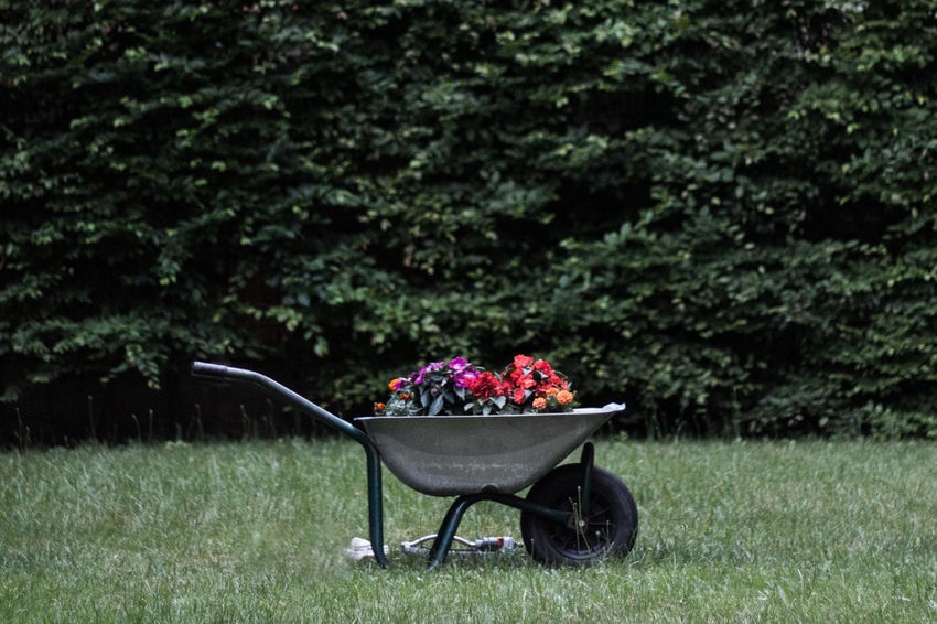 Barrow Beauty In Nature Day Flower Fragility Freshness Front Or Back Yard Garden Barrow Grass Green Color Growth Lawn Nature No People Outdoors Plant Tree Wheelbarrow