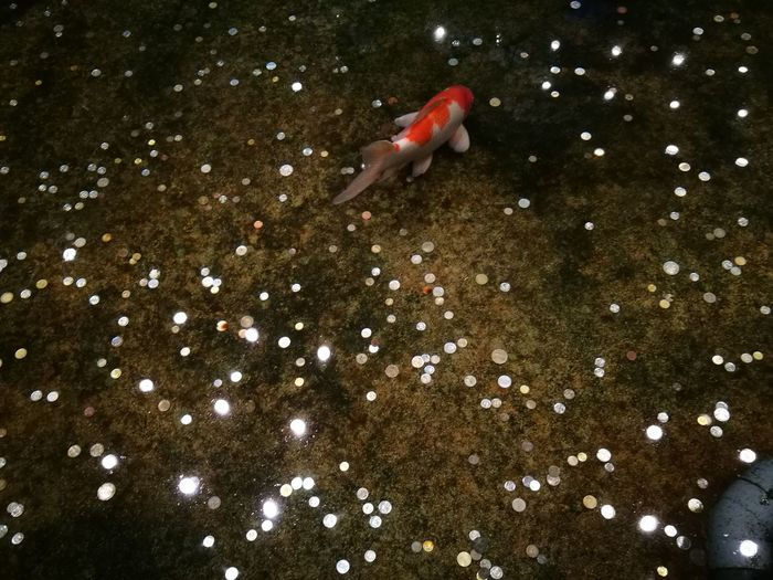 Animal Themes Animals In The Wild Outdoors Underwater Animal Wildlife Water One Animal No People Swimming Night Sea Life Nature Full Length UnderSea Pets Galaxy Star - Space Space