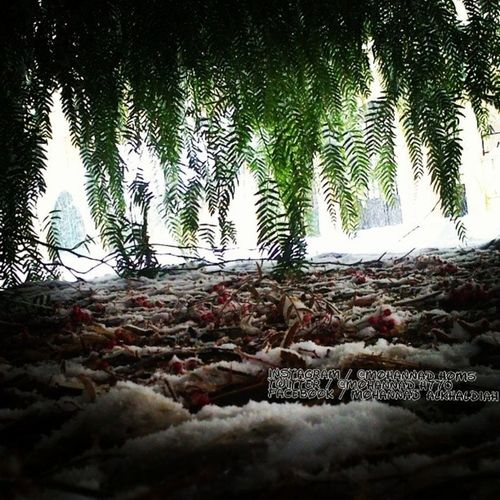 واجتمعت الفصول_الأربعة بمكان واحد وتحت شجرةٍ واحدة في مدينتي الجميلة. صباح الخير يا حمص .. هنا_حمص صباح الخير أحبتي :) Syria