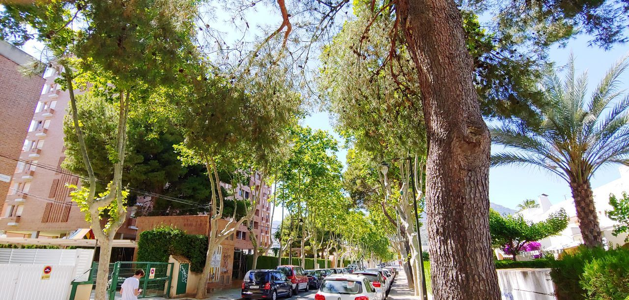 tree, plant, transportation, car, motor vehicle, mode of transportation, land vehicle, city, tree trunk, trunk, nature, day, architecture, street, growth, incidental people, building exterior, built structure, sky, outdoors, treelined