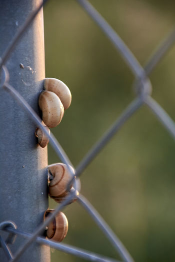 Close-up of snail on metal fence
