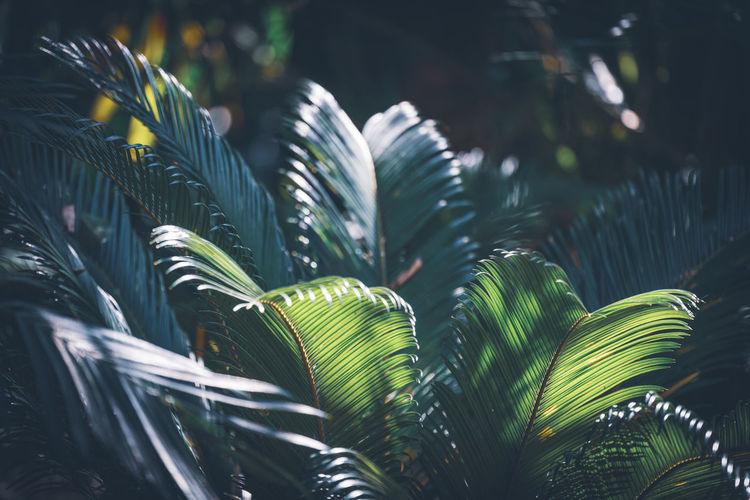 Plants growing in park
