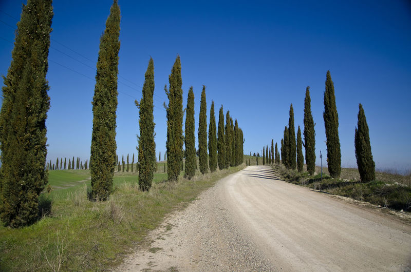 Road with Cypress Trees Cypress Tree Beauty In Nature Blue Clear Sky Cypress Trees  Day Diminishing Perspective Direction Environment Land Landscape Nature No People Non-urban Scene Outdoors Plant Road Scenics - Nature Sky The Way Forward Tranquil Scene Tranquility Transportation Tree Treelined