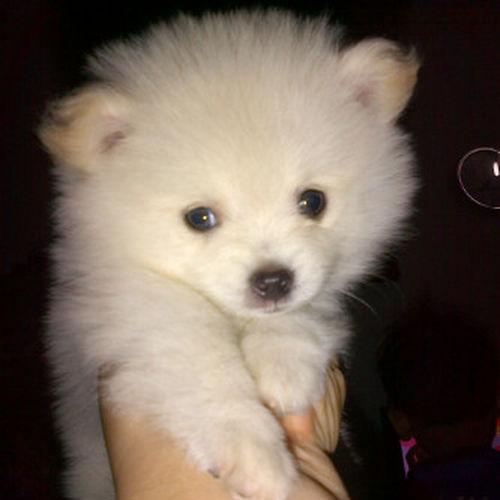 dodle ! so cute Cute Pets Pet Action