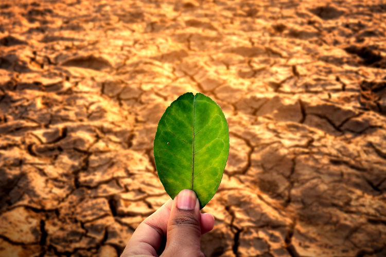 Human Hand Leaf Plant Part One Person Holding Nature Leaves Outdoors Drought