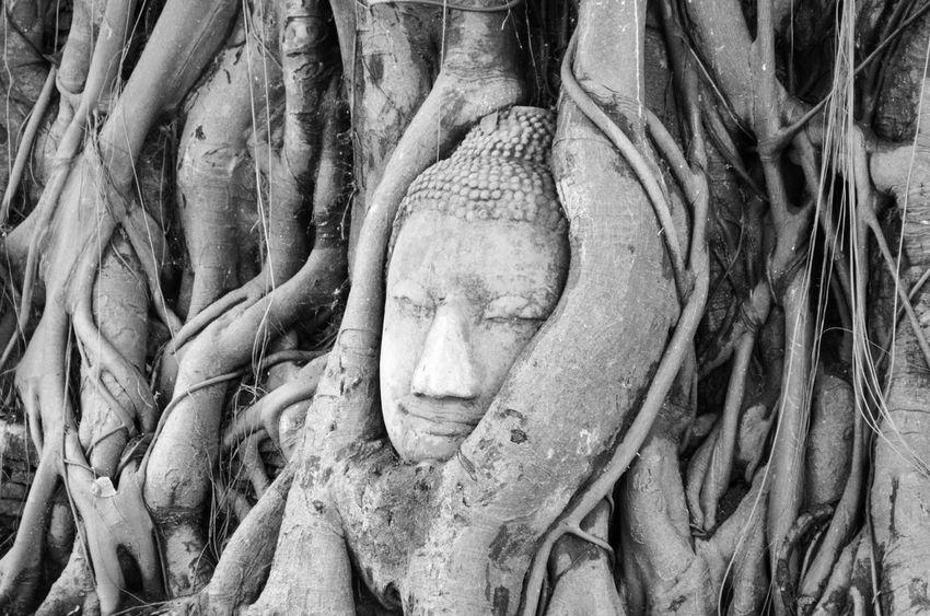 Wat Mahathat Thailand Thailand_allshots Ayutthaya Ayutthaya | Thailand Watmahathat