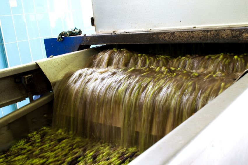When olives are gathered they are washed up by washing machine like this, before they are grinded and finally become oil.Industry Water Olive Olive Oil Oil Industry Gloves Slow Shutter Olives No People Oliveoil Washing Machine Machinery