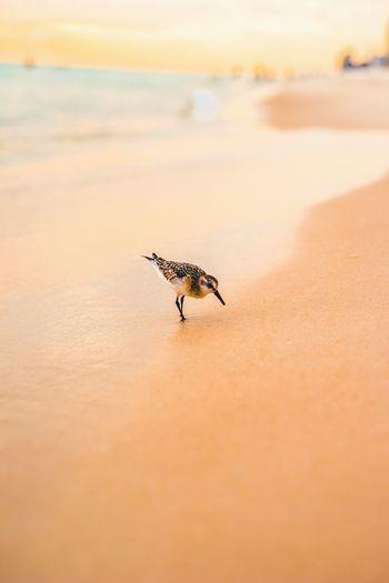 Beach Sunset Sand Nature One Animal Animals In The Wild Animal Themes first eyeem photo