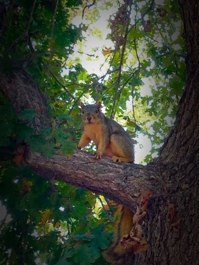 Little Friend Squirrel Treetastic Hanging Out Cheese! Friend Stop Motion