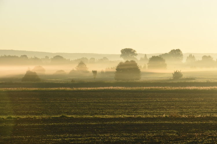 Scenic view of agricultural field at sunrise