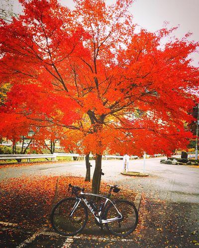 南アルプスロングライド 下部温泉 山梨県 Yamanashi,japan ロードバイク DeRosa Autumn Bicycle Beauty In Nature Autumn Leaves Autumn Colors Mountain Range Relaxing Hello World Enjoying Life
