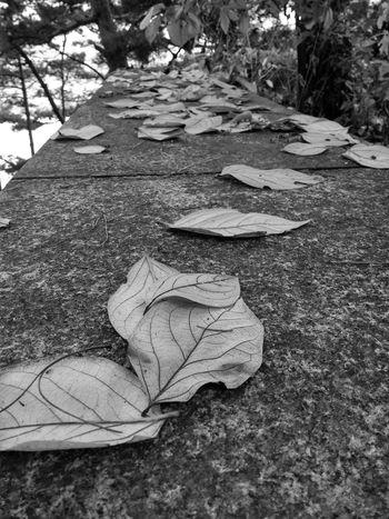 Monochrome Fall Leaves Fall