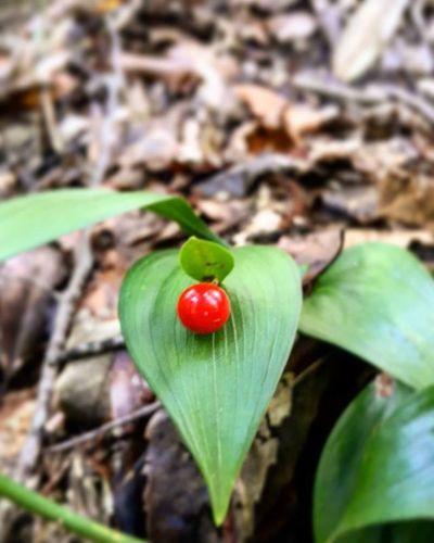Doğadankareler Yeşilkırmızı Sonbahar Kısa doğru