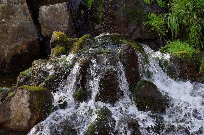 "This place is ""Shirakawa suigen"" Japan Kumamoto Water Nature Source Of Water Aso"
