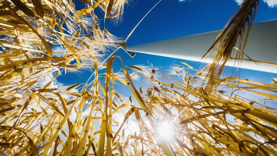 just work LG V30 Fields And Sky Fields Photography Windturbine Renewable Energy Tree Sea Sky Close-up