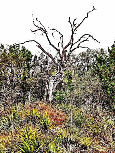 Nature Tree Landscape Outdoors Day Forest Scenics Plant Rural Scene Beauty In Nature No People Growth Travel Destinations Beauty Sky City Freshness Texas Landscape Texas Roadside Yucca Bare Tree Abundance