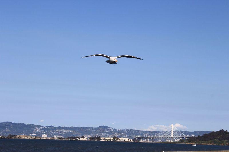 Bird flying over sea against clear blue sky