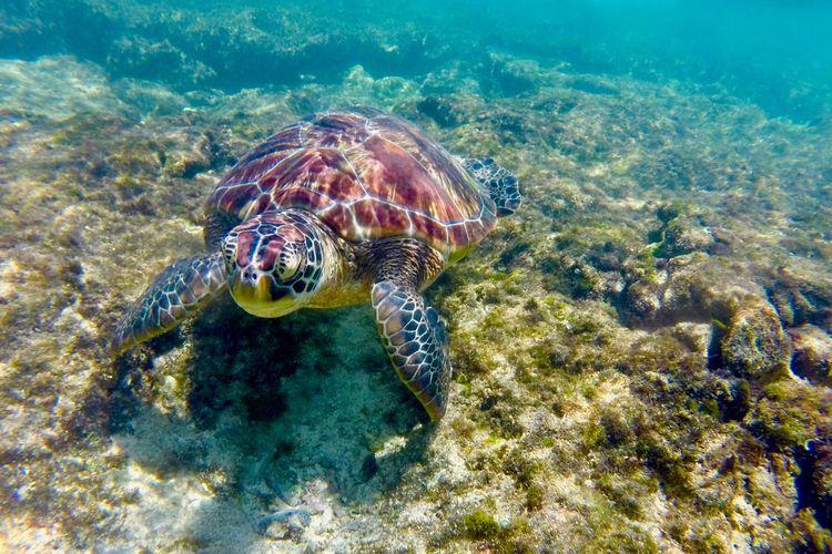 Turtle Sea Island Animals In The Wild Underwater Sea Turtle No People Nature