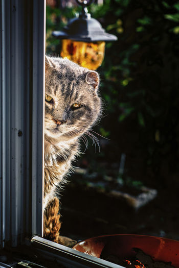 Lol cat. Window No People Outdoors Nature The Week On EyeEm Beauty Domestic Cat Cats Cat Feline One Animal Domestic Animals Pets Pet Portraits Mammal Animal Themes Nature Looking At Camera