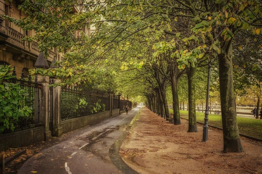 Paseo de Francia Tree Outdoors Nature Beauty In Nature Scenics Travel Destinations Leaves 🍁 Leaves🌿 BasqueCountry Autumn Yellow And Green Orange Colour Beauty In Nature City,