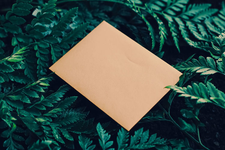High angle view of blank paper on plant