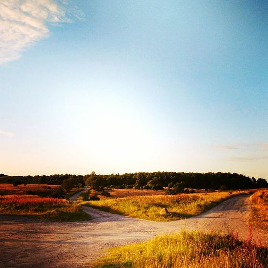 Agriculture Field Rural Scene Tranquility Landscape No People Outdoors Growth Nature Scenics Day Beauty In Nature Sky Danmark Travel Destinations Denmark Molsbjerge Mols Golden Hour Breathing Space EyeEmNewHere The Week On EyeEm Investing In Quality Of Life