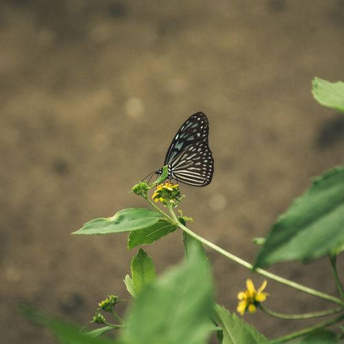 Insect Animals In The Wild Animal Themes One Animal Leaf Animal Wildlife Nature No People Green Color Butterfly - Insect Plant Day Outdoors Beauty In Nature Close-up Freshness