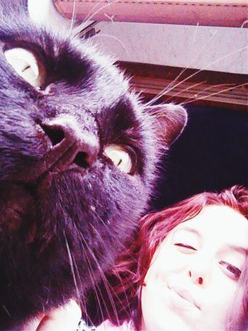 Cat Newhaircolour