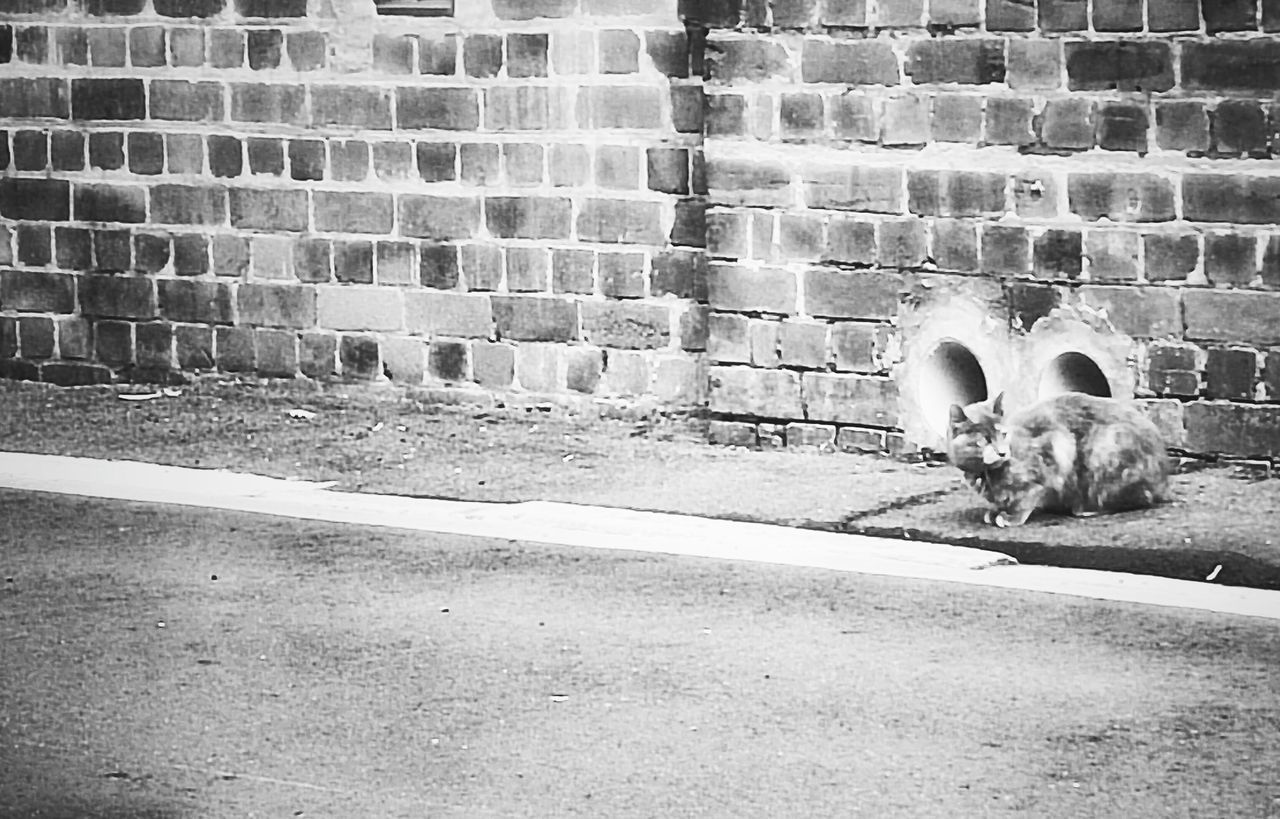 animal themes, pets, domestic animals, one animal, mammal, brick wall, dog, outdoors, day, no people, domestic cat, architecture