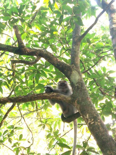 Tree Trunks Monkey Hanging On The Tree Looking At Day No People Go Higher Tree Branch Reptile Animal Themes