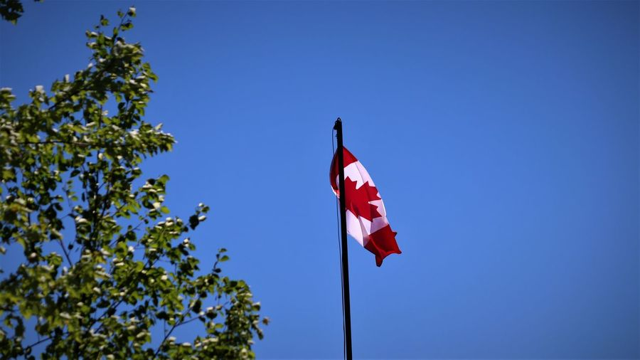 Blue Clear Sky Day Emotion Environment Flag Independence Leaf Low Angle View Maple Leaf National Icon Nature No People Outdoors Patriotism Plant Red Sky Tree Wind The Great Outdoors - 2018 EyeEm Awards The Traveler - 2018 EyeEm Awards The Still Life Photographer - 2018 EyeEm Awards The Architect - 2018 EyeEm Awards
