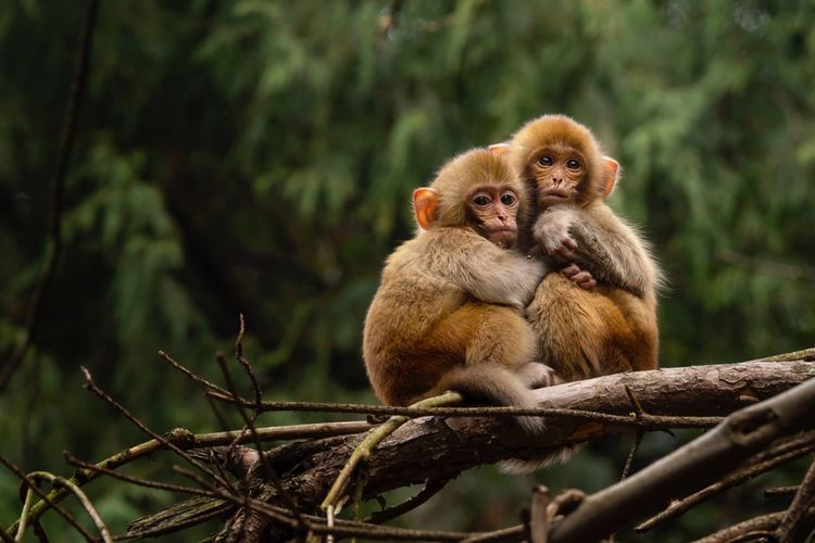 Two baby monkeys in the cold :) Macaque ZhangjiajieNationalPark China Nature Wildlife Animals In The Wild Animal Wildlife Animal Animal Themes Tree Vertebrate Young Animal Focus On Foreground Primate Group Of Animals Branch Nature Monkey Day Two Animals Togetherness Mammal