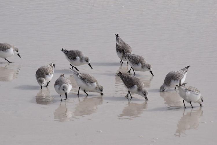 Buried beaks
