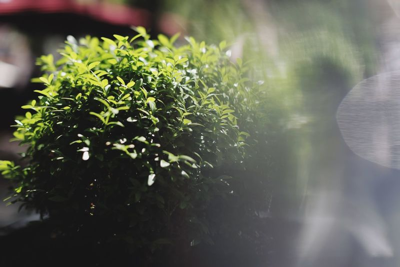 Green is the only way Plant Growth Green Color Nature Leaf Plant Part No People Beauty In Nature Day Water Selective Focus Close-up Tree Outdoors Tranquility Sunlight Focus On Foreground Freshness Reflection