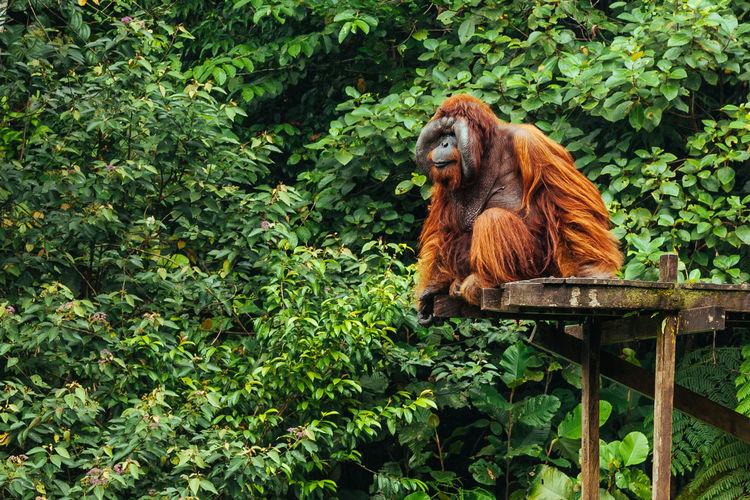 Monkey looking away on tree