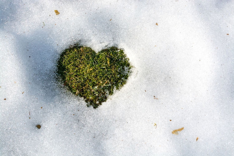 Snow melting in the shape of a heart spring love concept background cold climate relations. Sweden. Grass Love Melting Beauty In Nature Close-up Day Green Color Growth Heart Nature No People Outdoors Symbolic