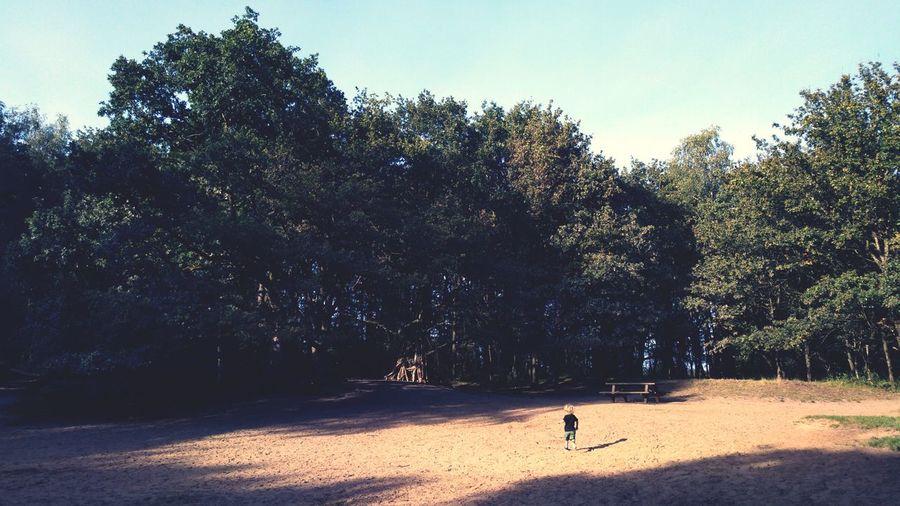 Sandbox. Nature Sand Sand Dune Tree Shadow Sunlight Sky