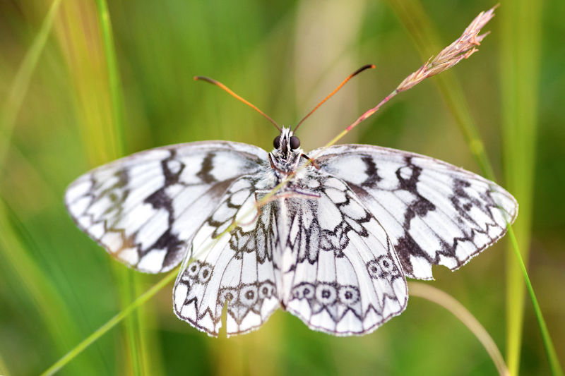 Close-up of white butterfly on plant