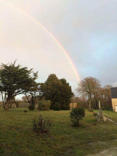 Tree Nature Scenics Tranquility Double Rainbow