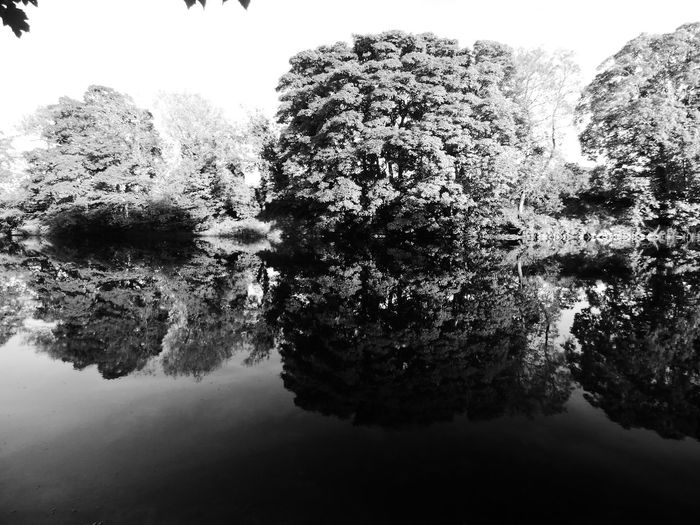Black and White reflection Tree No People Close-up Water Nature Day Outdoors Sky Pixelated Art Is Everywhere Art Photography Popular Photography Low Angle View Scenics Popular Photos Beauty In Nature Tranquility Nature Tree Reflection