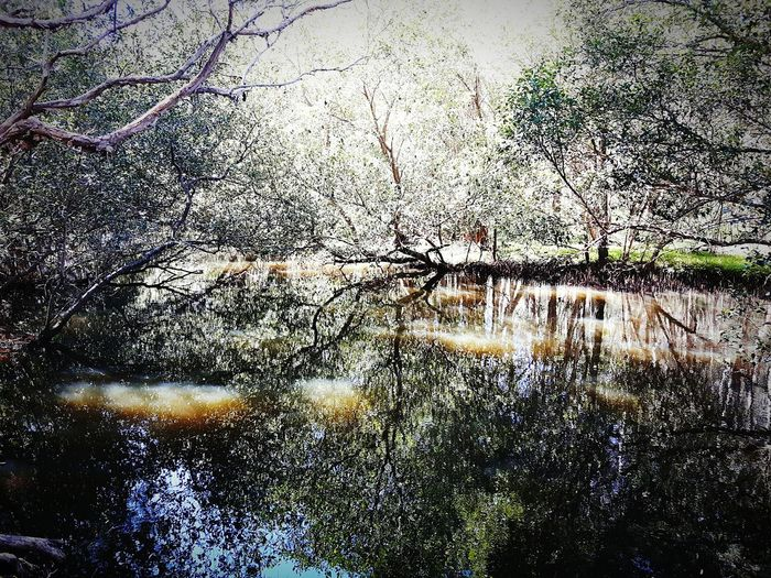 Swamp! Majorreflection Crazypic Coollighting Hot BrightDay Illusion Samsungphotography Travel Photography Hello World Enjoying Life Rainforest Portmacquarie 6monthstravel Eastcoat Memories