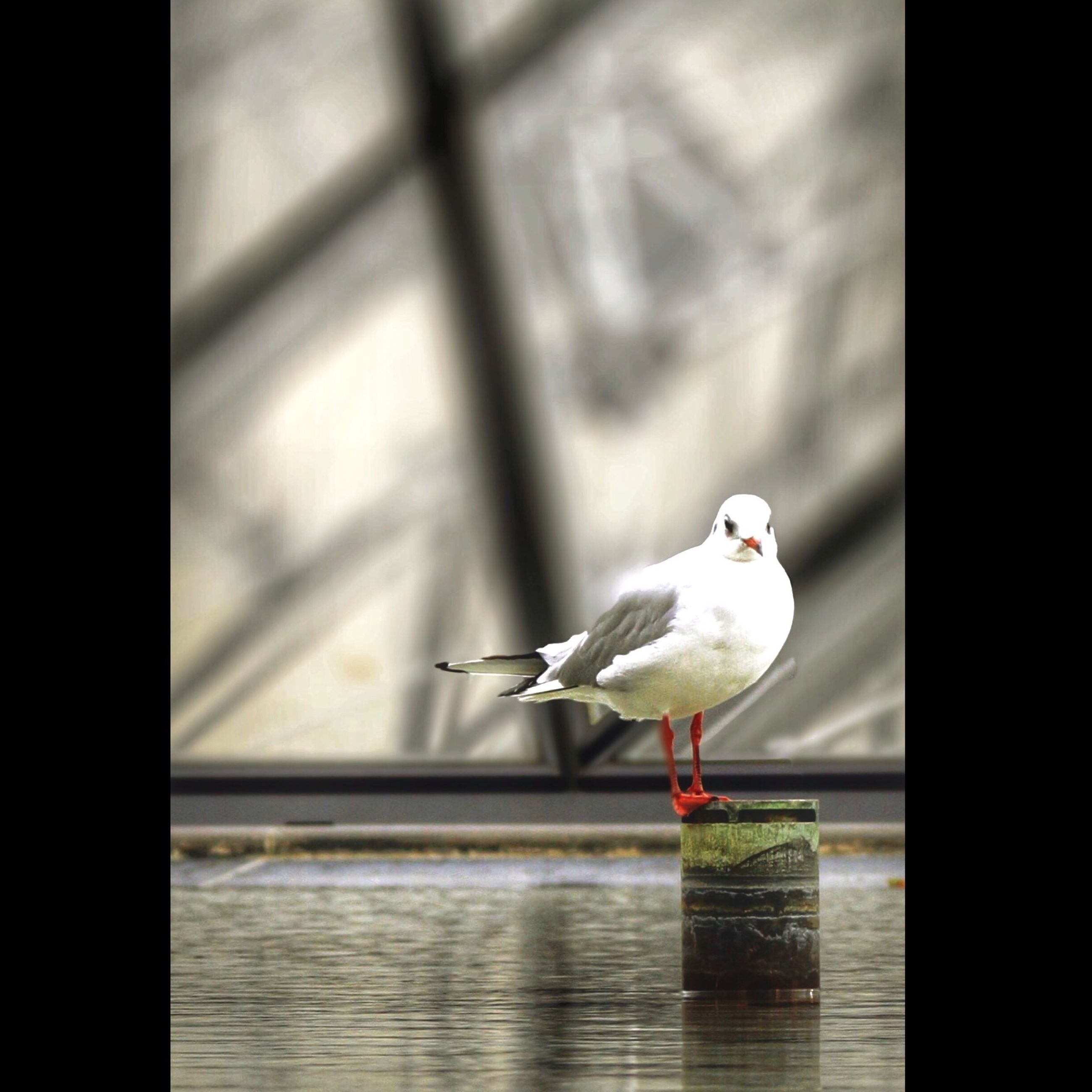 bird, animal themes, one animal, wildlife, animals in the wild, perching, seagull, water, focus on foreground, auto post production filter, transfer print, nature, indoors, full length, day, white color, close-up, no people, reflection