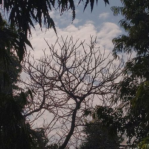 Tree of Clouds